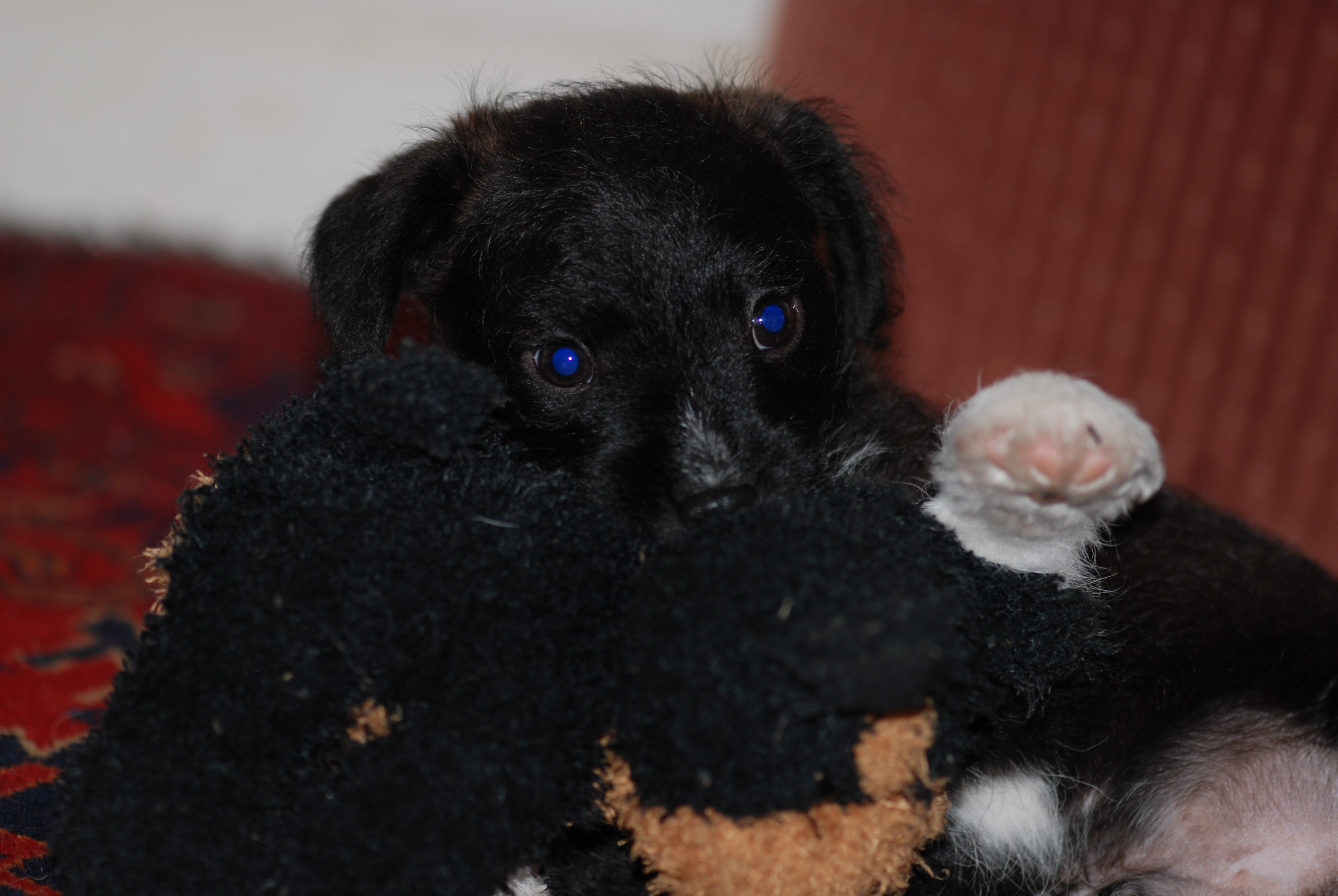 Boots with favourite toy dog.JPG