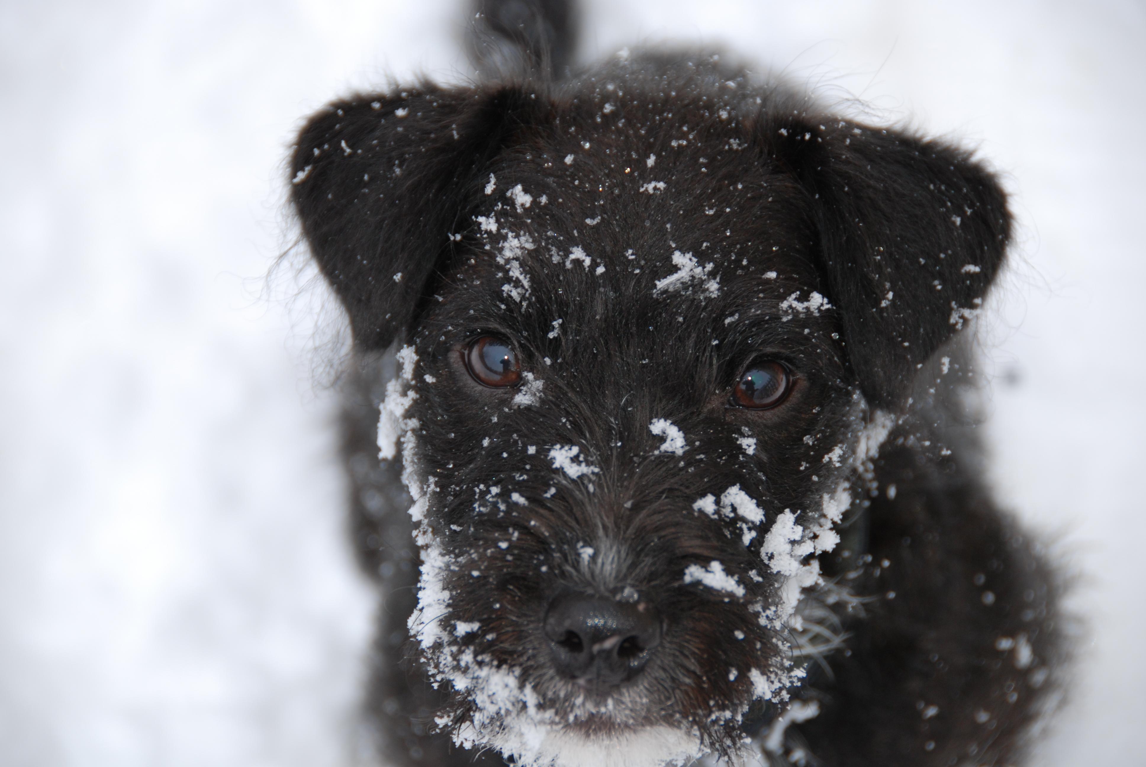 I haven't been in the snow - honest!.JPG