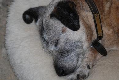TD sleeping.JPG
