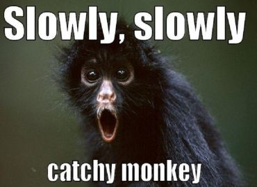 Slowly slowly catchy monkey